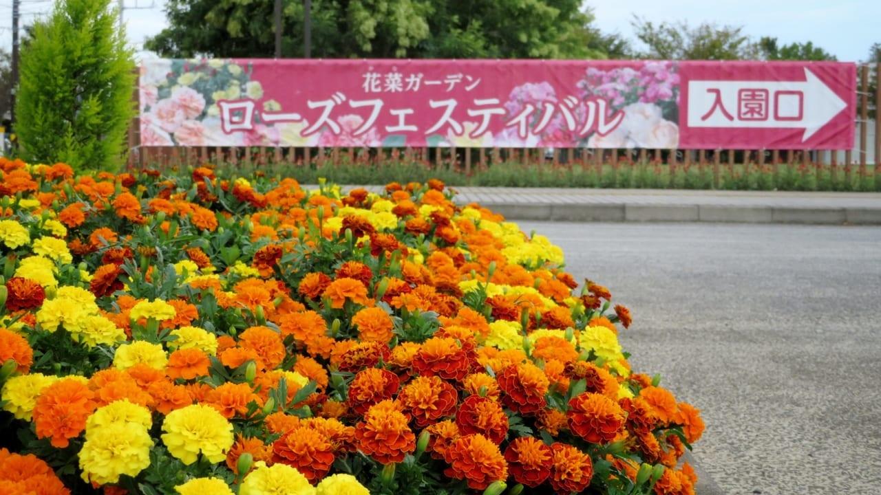 「ローズフェスティバル2019~秋~」開催中の「花菜ガーデン」