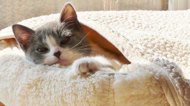 猫 県 保護 石川
