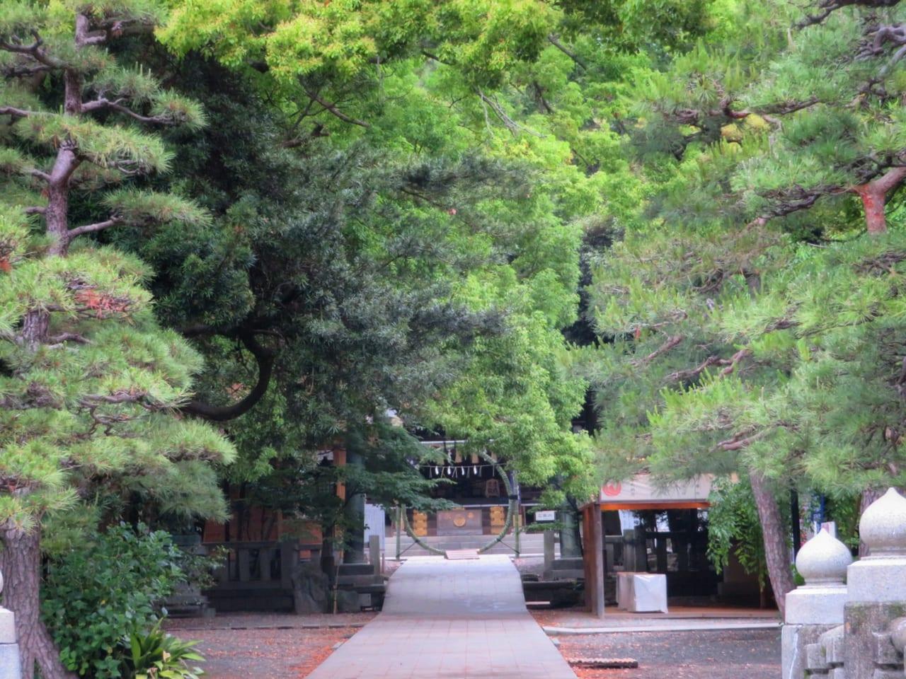 平塚八幡宮に「夏病みしない」茅の輪がお目見え 新型コロナウイルス早期終息を願って例年よりひと月早く