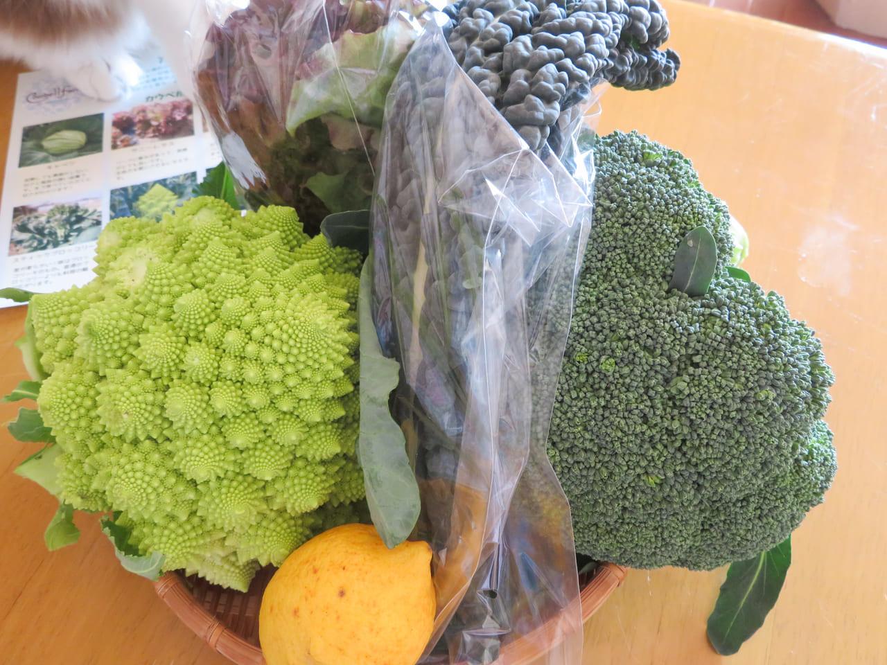 300袋完売!コロナ禍で行き場を失ったレストラン用に栽培されていた有機・無農薬野菜の詰め合わせを販売する「大磯下町野菜マルシェ」が開催されました。